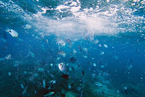 Mauritius Vs Maldives Vs Seychelles - Choosing Your Idyllic Island Vacation